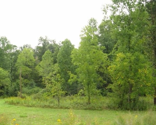 Land For Sale By Owner - Chestnut Ridge Farm